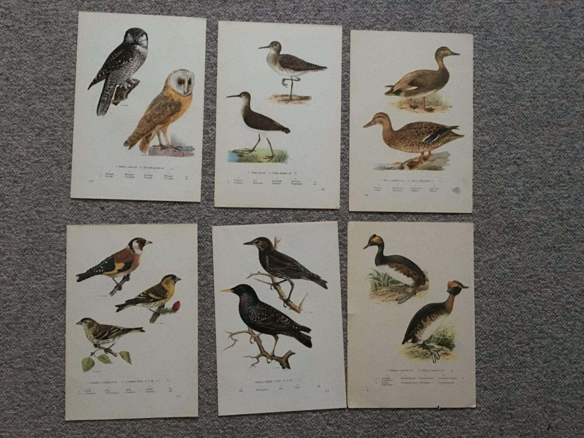 Gamle farve plancher af danske fugle signeret W.v.Wright